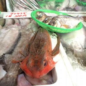 ホウボウ系の魚